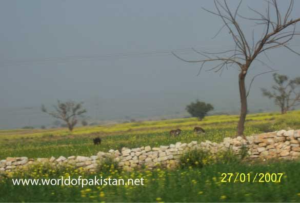 Kalar Kahar Pictures